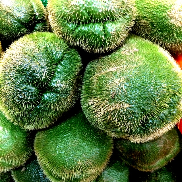 Prickly Chayote Squash Information, Recipes and Facts