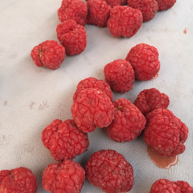 red chinese mulberries information and facts, Beautiful flower