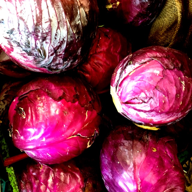 What is the scientific name for cabbage?