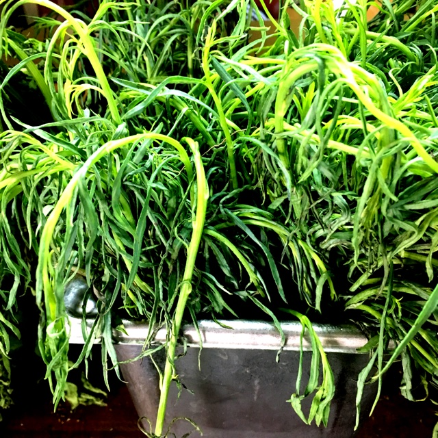 Escoge La Semilla Y Planta Lo Tuyo - Púrpura Kush Productos | Teespring