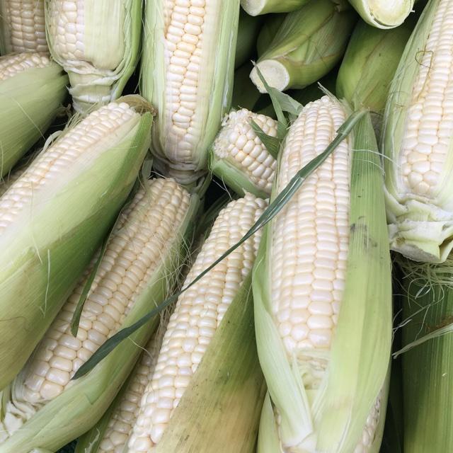 Vista Farmers Market Near Vista, California, United States About 93 days ago, 6/24/17. Spotter's comments : White Corn spotted at Vista Farmers Market.