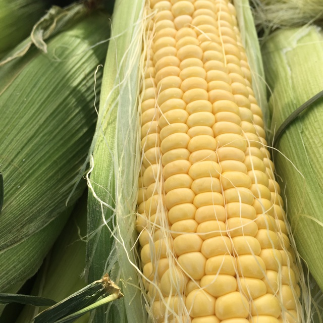 Schnuck's Near Scott City, Missouri, United States About 62 days ago, 7/24/17. Spotter's comments : Yellow Corn spotted at Schnuck's.