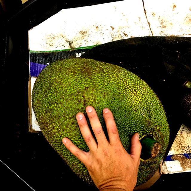 99 ranch market near san diego ca united states about 387 days ago 72417 spotters comments jack fruit spotted at 99 ranch market