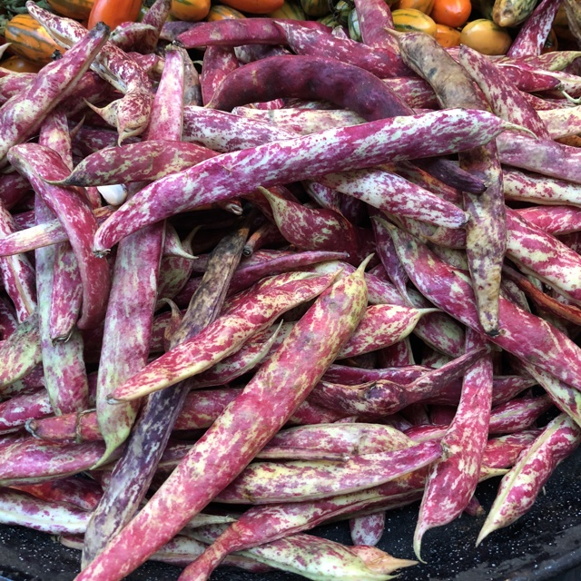 recipe: speckled cranberry pole bean [28]