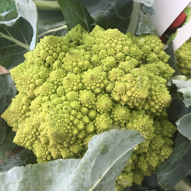 Broccoli romanesco information recipes and facts vista farmers market mightylinksfo