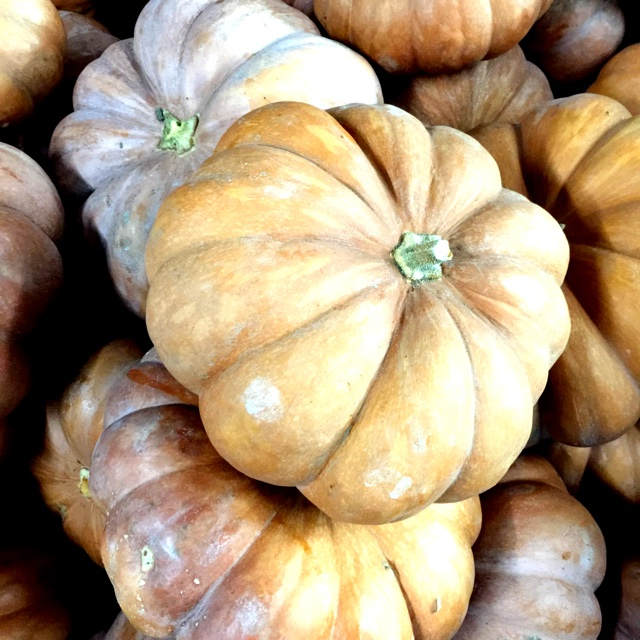 Image result for mini fairytail pumpkin variety