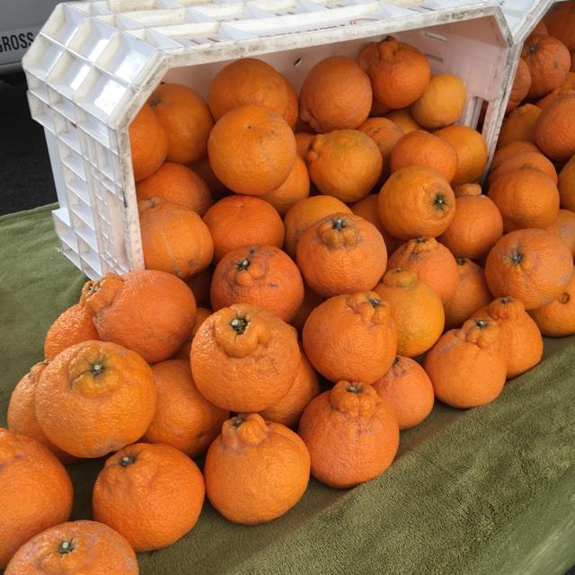 baum cox orange