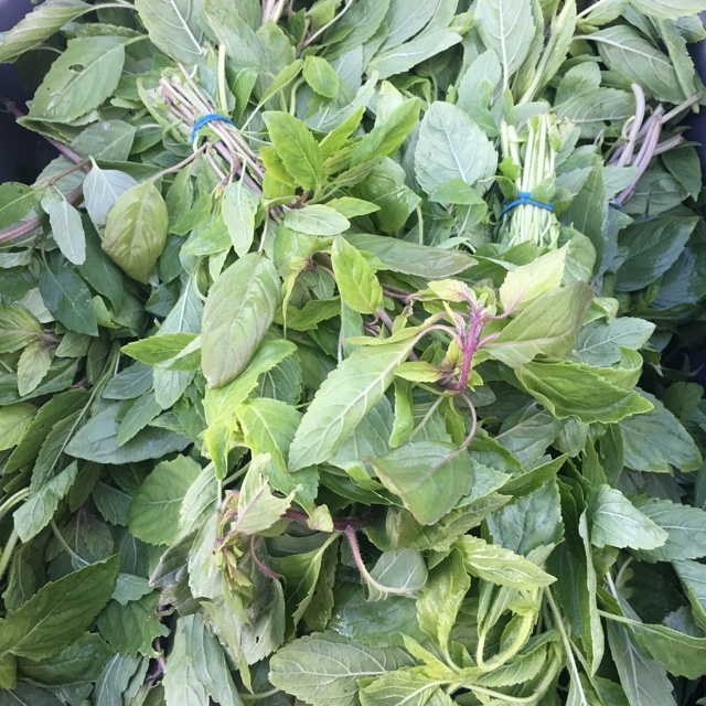 Holy Basil Information Recipes And Facts