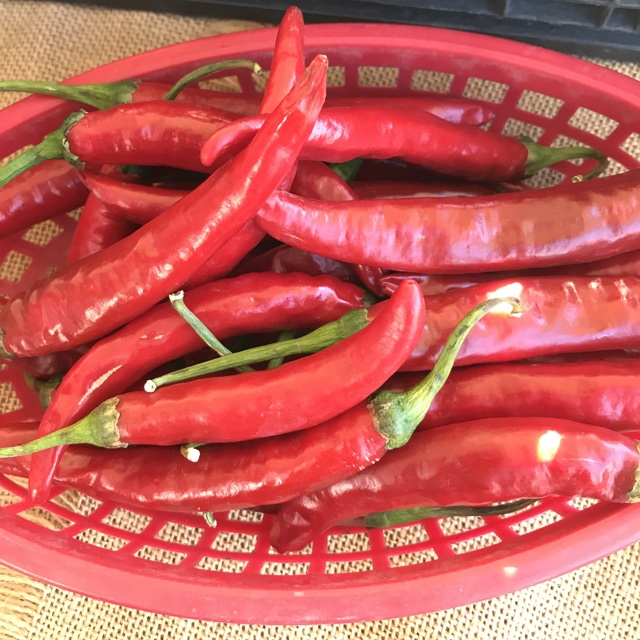 2684aeb62f0e Spotter s comments   Korean Hot Chile Pepper spotted at Hillcrest Farmers  Market.