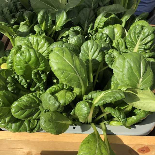 Tatsoi Information Recipes And Facts