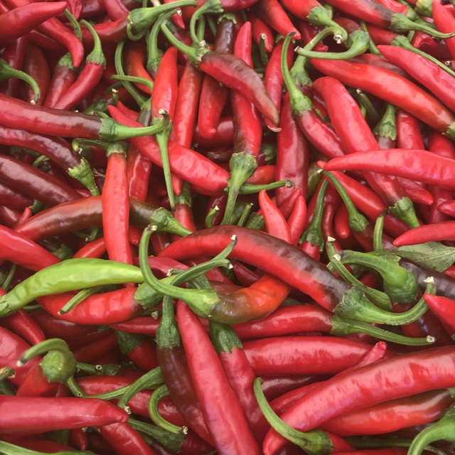 a300a89f718e Spotter s comments   Red Korean Hot Chile Peppers spotted at Little Italy  Mercato. Little Italy Mercato