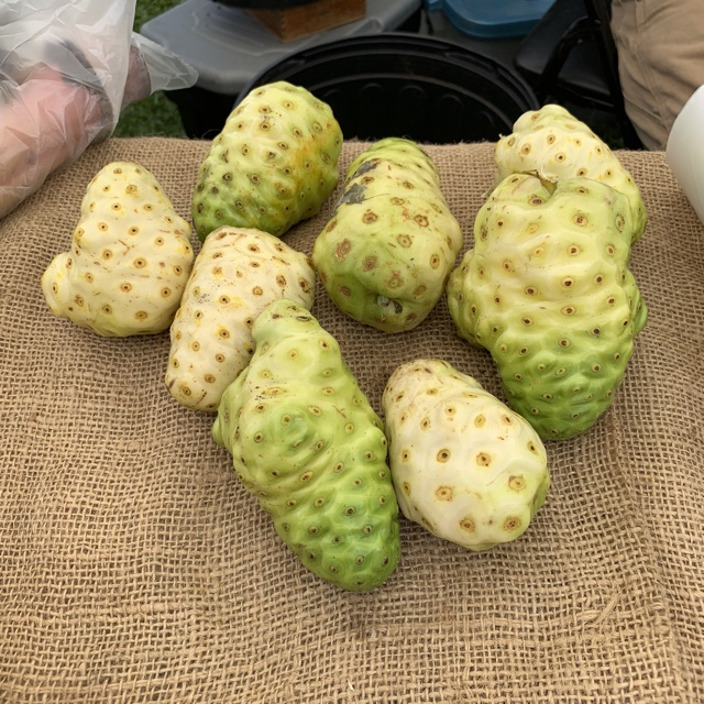 Noni Fruit Information, Recipes and Facts