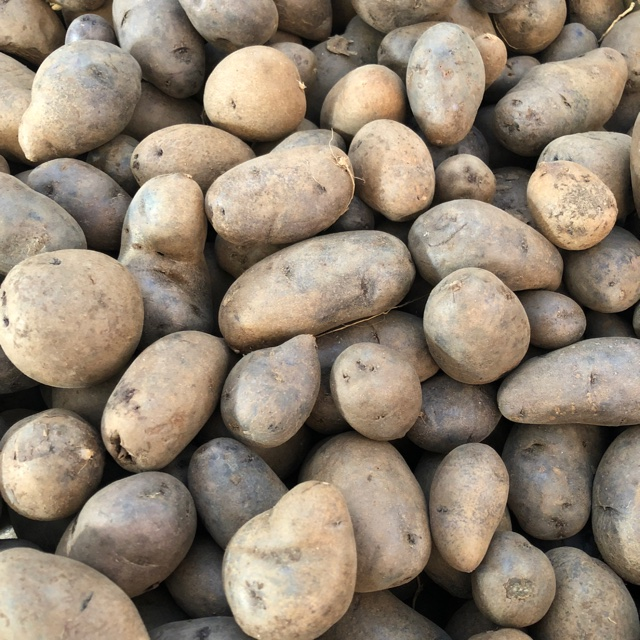 Purple Potatoes Information, Recipes and Facts