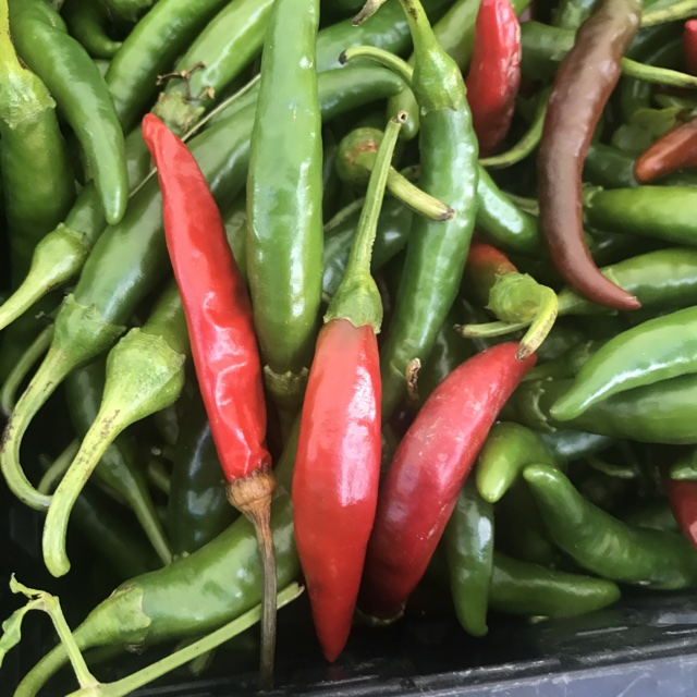 4305bc10909d Spotter s comments   fresh green korean peppers! Little Italy Mercato