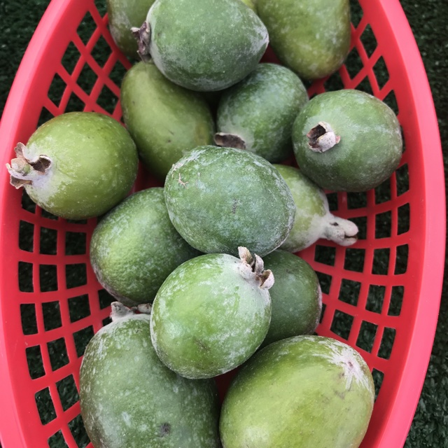 Pineapple Guavas Information, Recipes and Facts