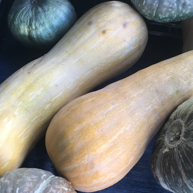 Thompson /& Morgan The Taste of Italy Courgette Zucchino Tondo Di Toscana Seed