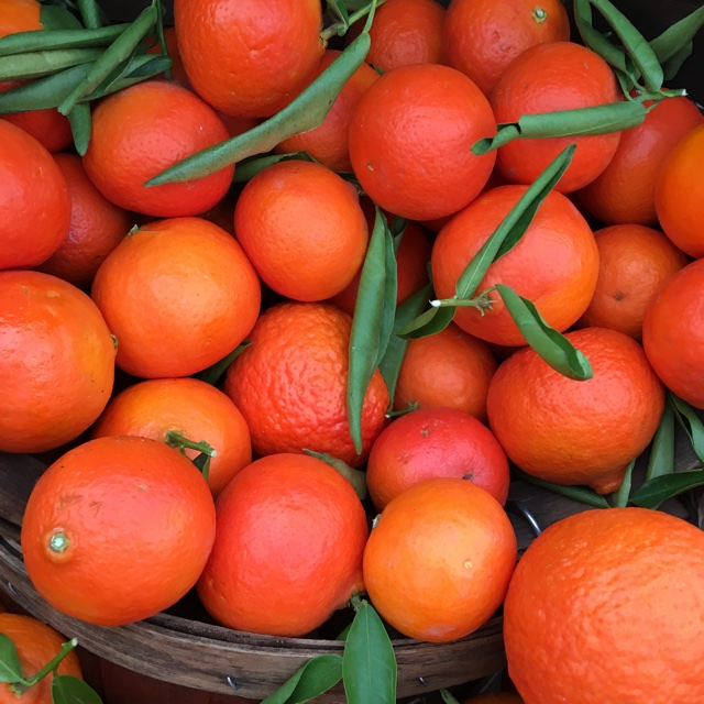 Fremont Tangerines Information and Facts