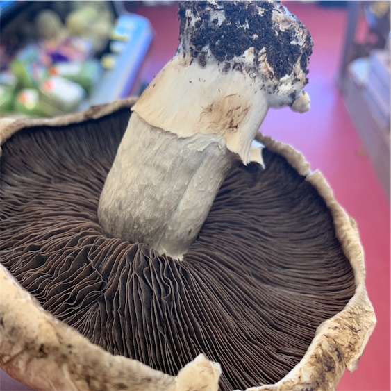 Portabella Mushrooms Information And Facts