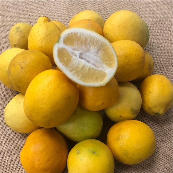 Meyer Lemons Information Recipes And Facts